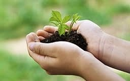 Green seedling with soil held in palm of two outstretched hands